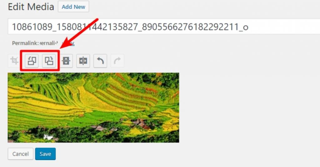 WordPress Image Error